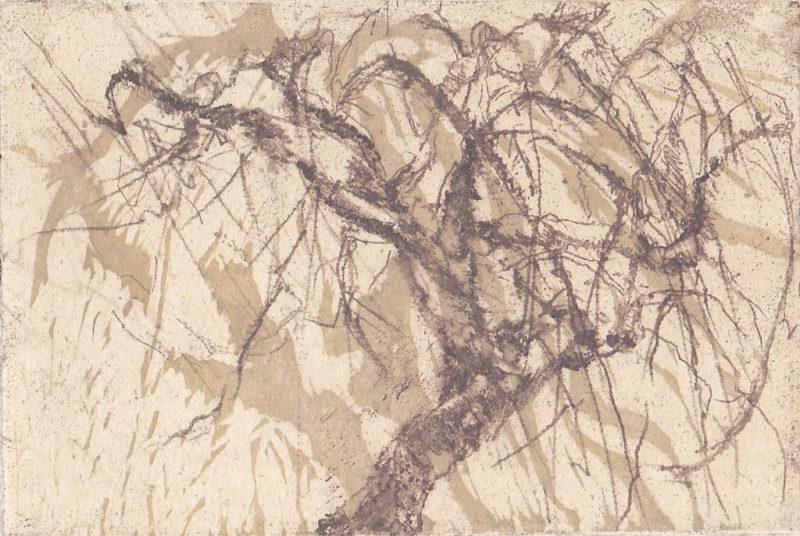Arbres - Marie Claude Gardel - L'Alice Edition